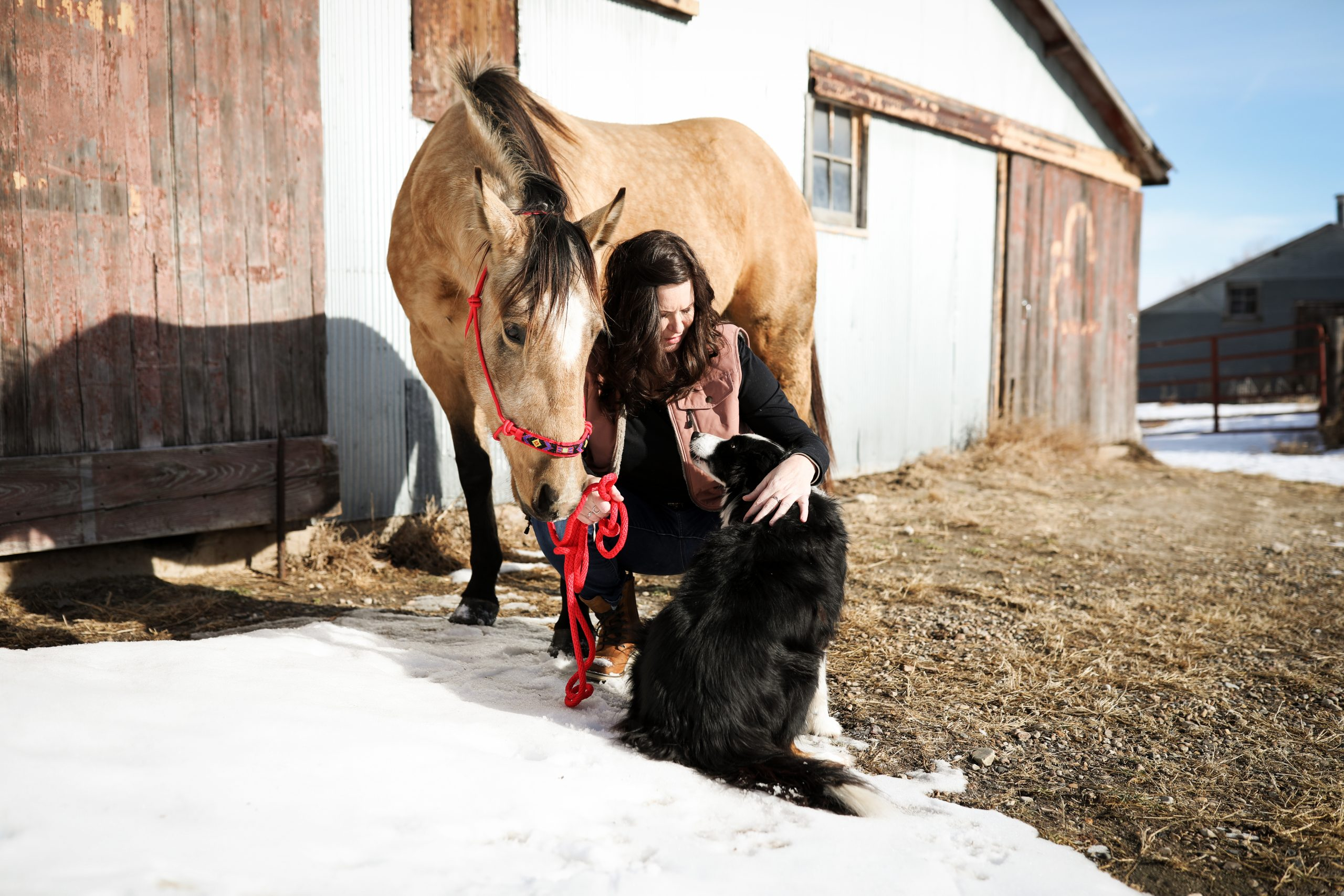 Read more about the article Healing With Horses